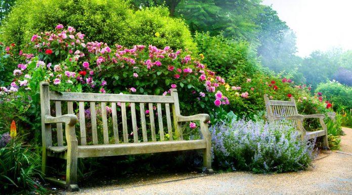 Gartenbank im Garten